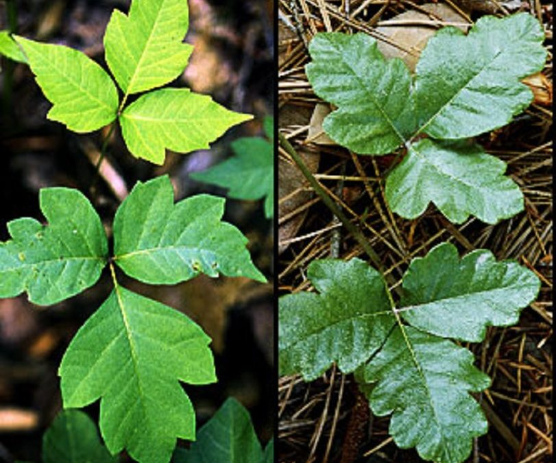 Spot This Rash—Summertime—Poison Ivy